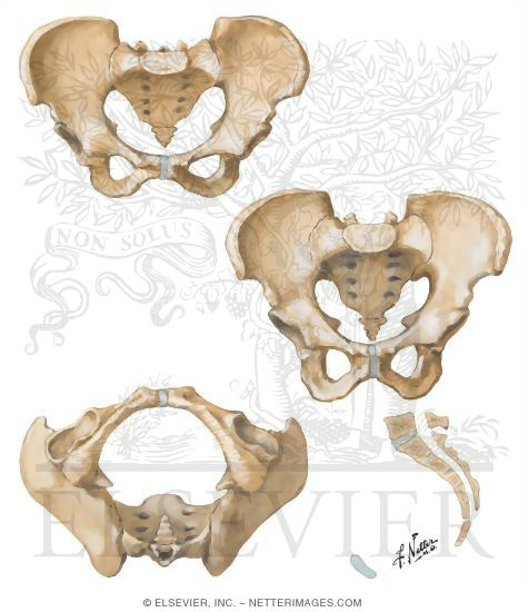 Sex Differences of Pelvis: Measurements
