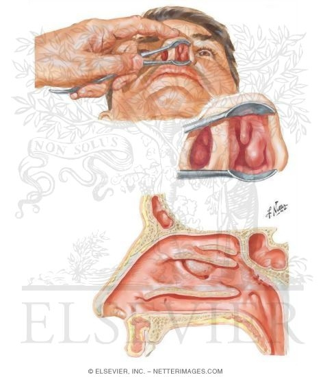 Human Nose Anatomy Bigking Keywords And Pictures