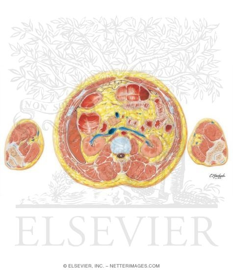 Abdomen-Renal Hilum and Vessels