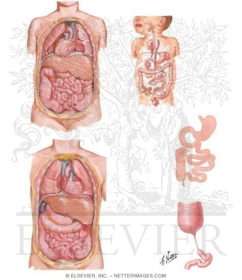atresia, and situs inversus, Skeleton