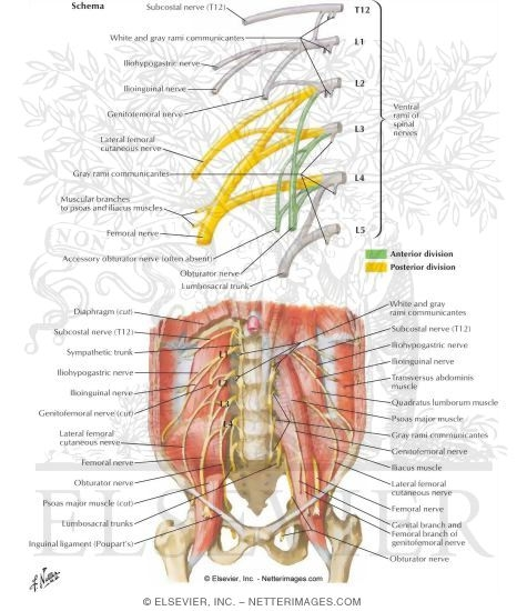 4479 on lower back and hip diagram