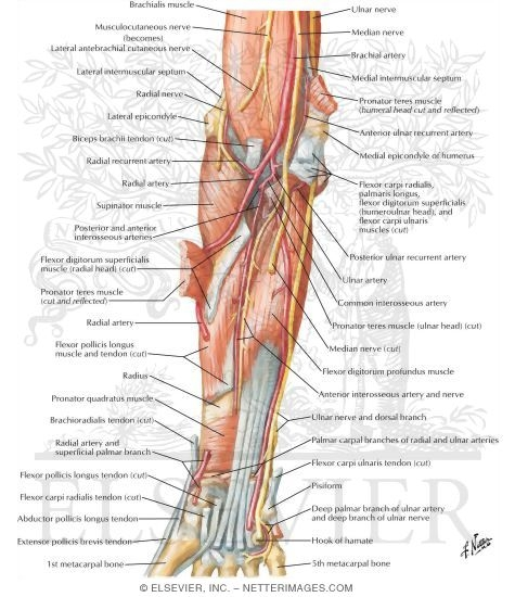 Atlas of Human Anatomy - 1st Edition