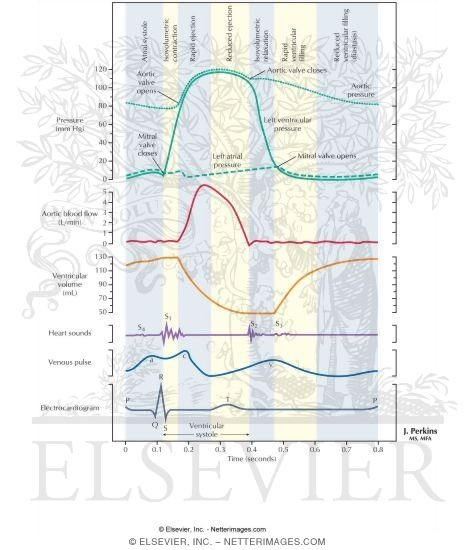 Wiggers diagram labeled cardiac cycle ccuart Gallery
