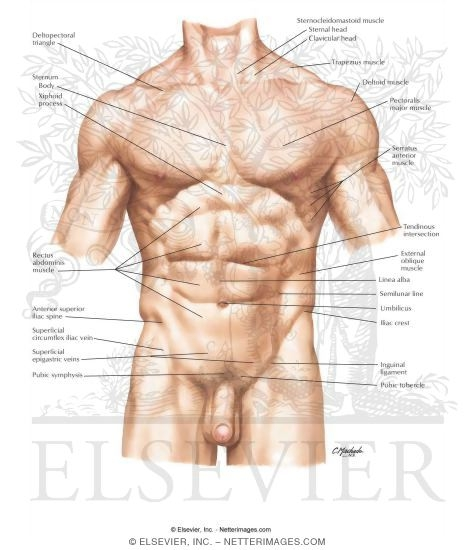 Atlas Of Human Anatomy 3e