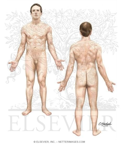 Illustration of Anatomical Position of the Body from the Netter Collection