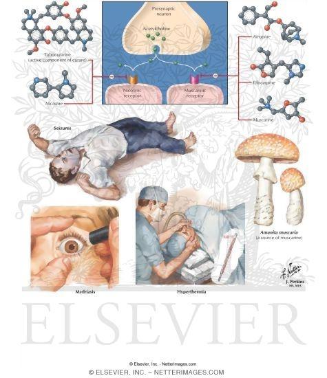 anticholinergic drugs, Skeleton
