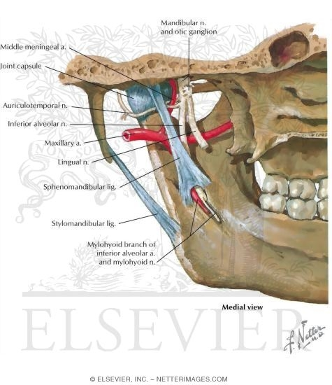 Sensory Innervation of the Temporomandibular Joint