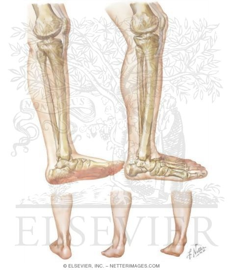 Supination and Pronation of the Foot In Running