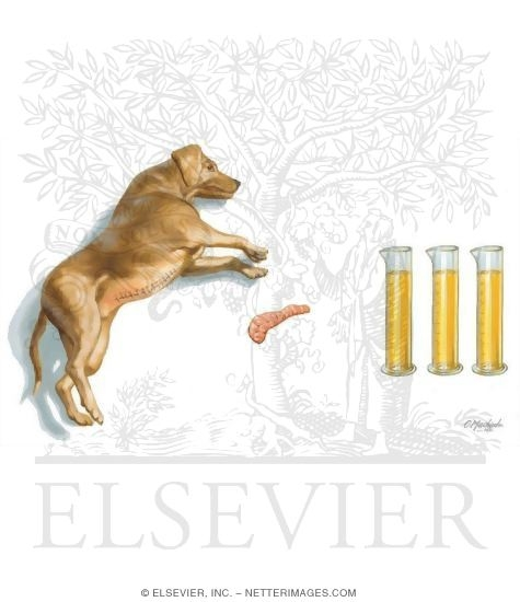 Dog and Pancreas With Vials of Urine