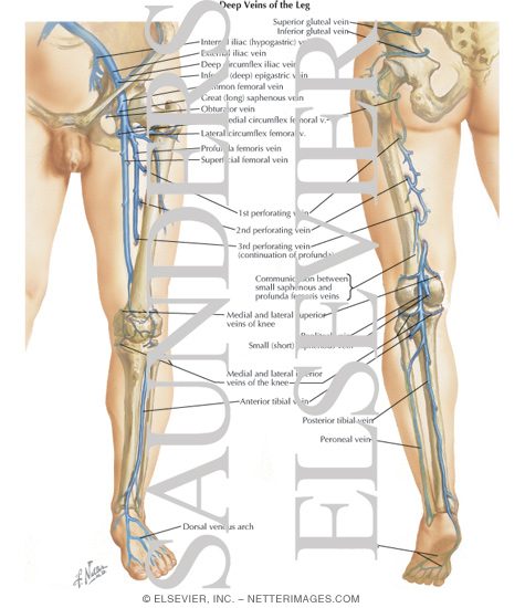 Venous Disorders Of The Lower Extremity