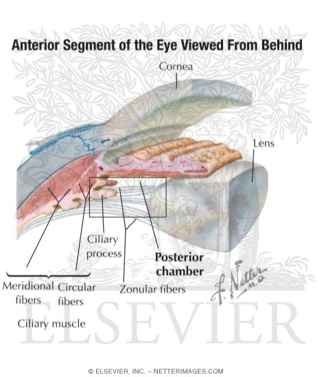 Anterior And Posterior Chambers Of Eye Anatomy Of The Anterior Chamber