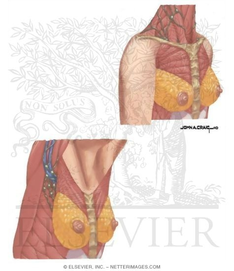 Positions for Examination of the Breast