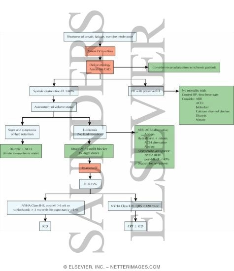 Pricing Algorithm: Algorithm For Management Of The Cardiovascular System