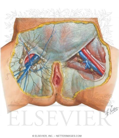 inguinal lymph nodes pelvic swollen herpes