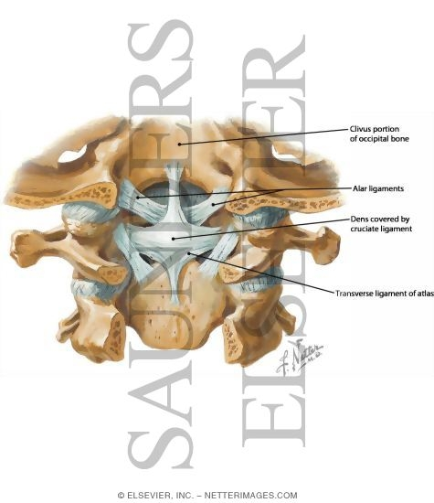 Craniovertebral Ligaments