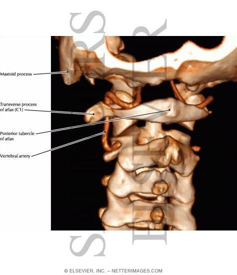 Artery Atlas