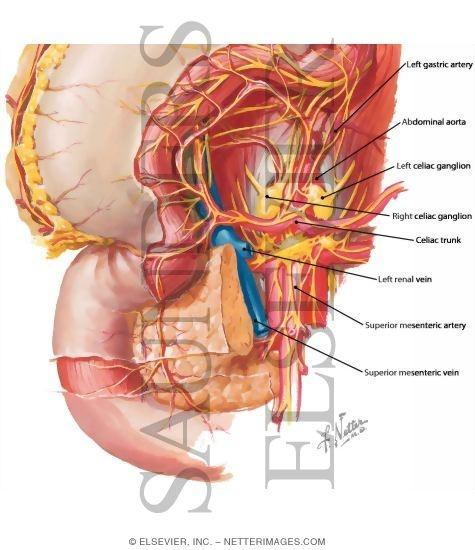 Celiac Plexus