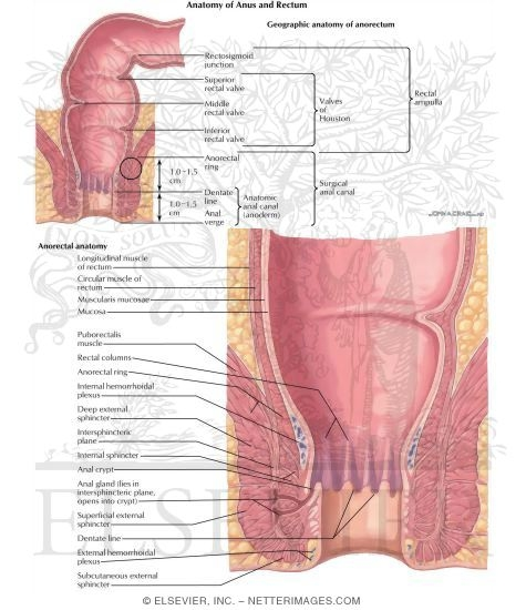 Anorectal Disorders Anatomy Of Anus And Rectum