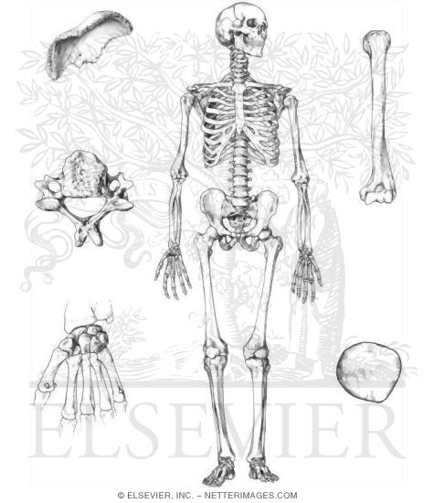 Skeleton Anatomy Coloring Book | Coloring Pages