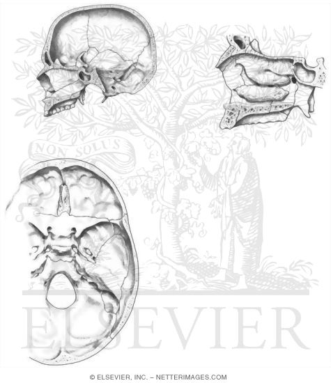 Netters Coloring Book 49 Packed With Anatomy Skull Page Welcome To Netter Images