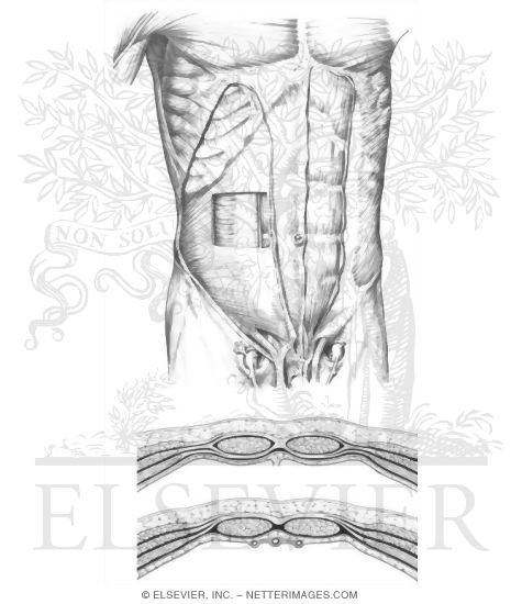illustrations in anatomy coloring book