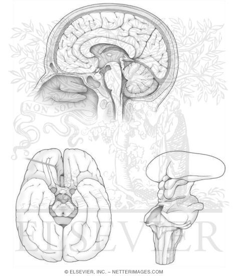 Anatomy Coloring Book Chapters Welcome To Netter Images