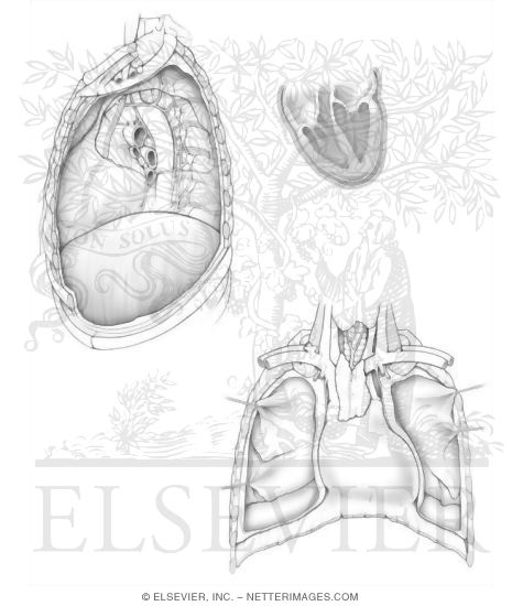 Netter Anatomy Coloring Book Pages Netters Page Heart I