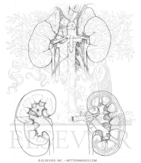 kidney labeling coloring page shoulder coloring page