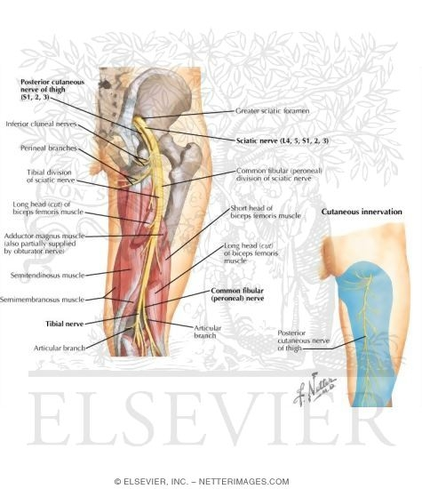 Hip Pain in Women Causes and Pain Relief Tips
