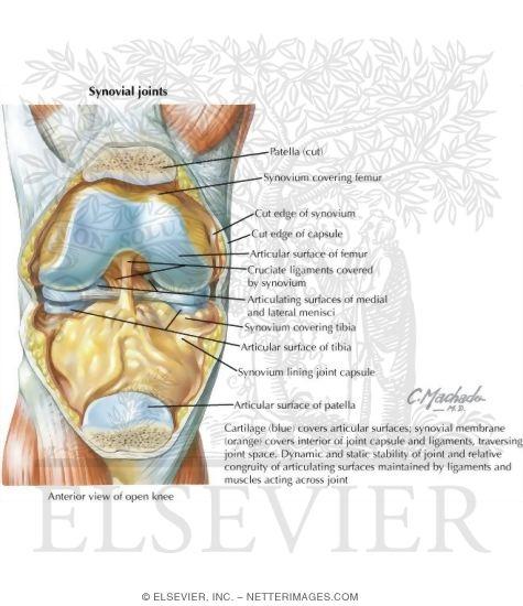 Netter\'s Concise Orthopaedic Anatomy