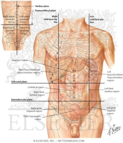 Regions and planes of abdomen regions of the abdomen 37969 ccuart Image collections