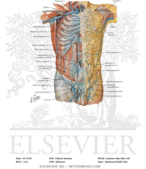 Abdominal vein anatomy