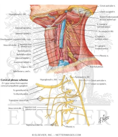 Illustrations In Clinical Anatomy