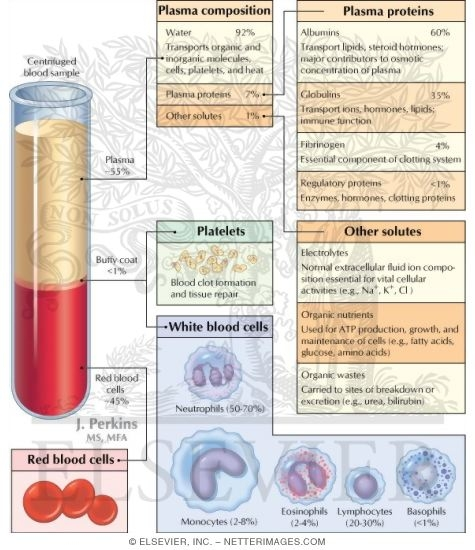 Cardiovascular System: Composition of Blood