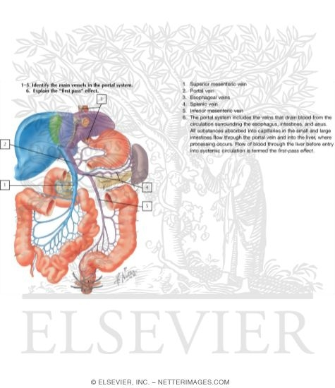 Hepatic Portal Vein Tributaries: Portocaval Anastomoses