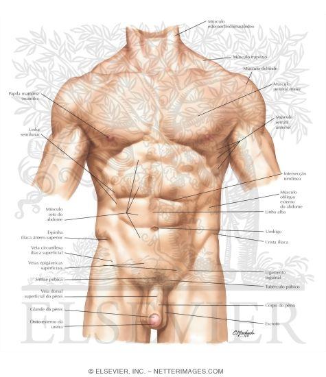 Abdomen: Surface Anatomy