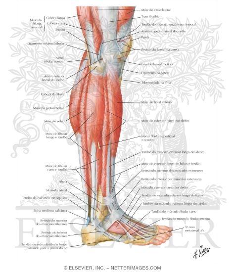 Anatomy plc net
