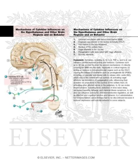 Mechanisms of Cytokine Influences on the Hypothalamus and Other Brain Regions and on Behavior