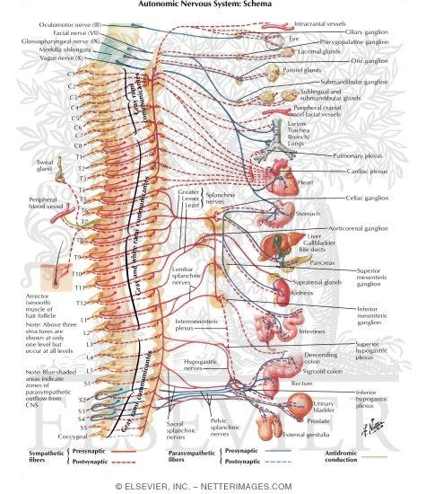Atlas of Human Anatomy - 3E