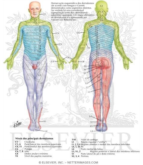 dor de coluna sintomas