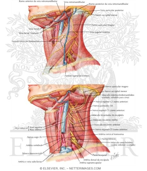 Posterior Triangle: General Information