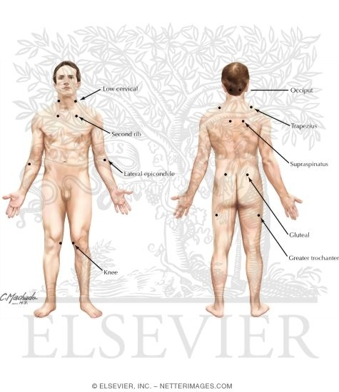Position of the Body