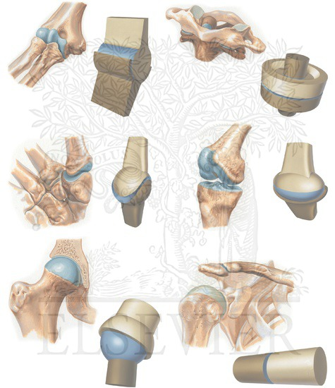 types of synovial joints, Sphenoid
