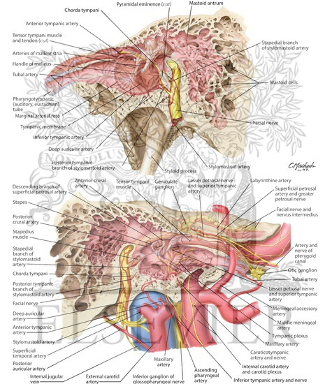 Tympanic Cavity