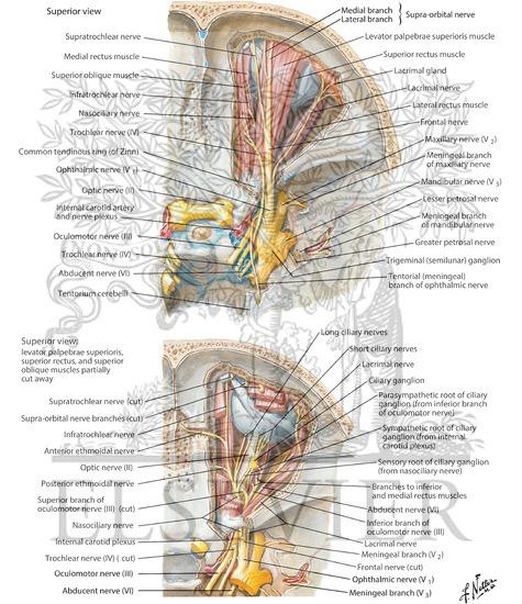Nerves of Orbit