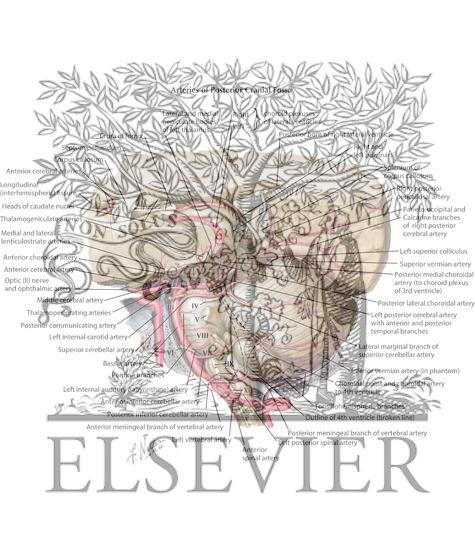 Vertebrobasilar Arterial System