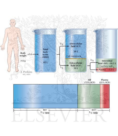 the constituents of body fluids Water main component of all body fluids comprising 90 per cent of blood plasma, lymph, urine saliva, bile, tissue fluid etc without it fluids.