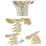 Atlantooccipital Junction