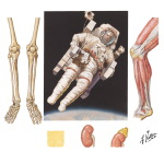 Musculoskeletal Effects of Weightlessness (Spaceflight)