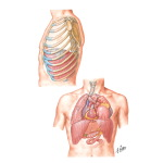 Diaphragmatic Injuries